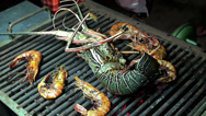 Stock Video Footage of Grilling big Spiny Lobster on the coals