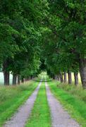 Avenue of maple trees Stock Photos