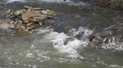 Stock Video Footage of Turbulent mountain stream