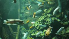 reef. sea life. ocean animals. fish background - stock footage