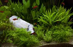 Green plant in under water aquarium Stock Photos
