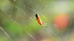 Cobweb and insect Stock Footage