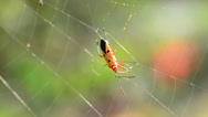 Stock Video Footage of Cobweb and insect