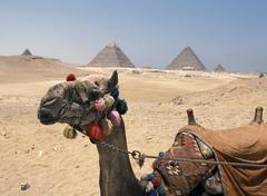 camel by pyramids, egypt - stock photo