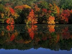 Reflection of colorful trees Stock Photos