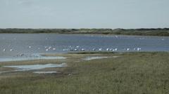 Swan in Denmark 2 Stock Footage