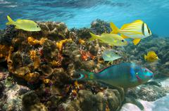undersea colors in a coral reef - stock photo