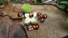 Chestnuts scattered on the stump, tilt shift lens - stock footage
