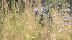 Summer meadow Stock Footage