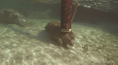 Manatee Itch Stock Footage