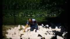 Farm work never ends, feeding the chickens, 541 vintage film home movie Stock Footage