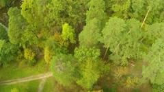 Flight over wood. Landscape Stock Footage