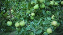 Apple farm in Marpha, Mustang, Nepal. Stock Footage