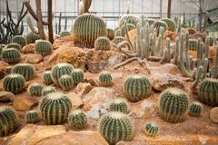 cactus plant in green house use for multipurpose - stock photo
