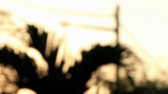 Panning Vegetation Bokeh 1 Stock Footage