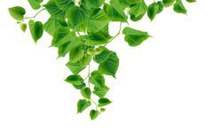 green leaves border - stock photo