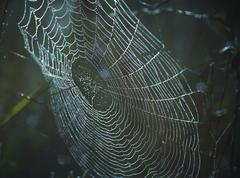 dewy cobweb - stock photo