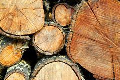 Firewood trunks Stock Photos