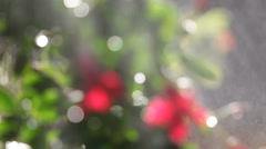Flowering plant with water spray defocused Stock Footage