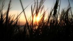 Sunset sea grass Stock Footage