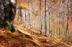 Beech forest. Stock Photos