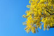 Stock Photo of yellowish leaves