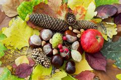 Apple, autumn leaves, horse chestnut, pine cones, rosehip and nuts Stock Photos