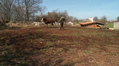 Being run horses  5 Stock Footage