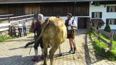 Cattle Livestock driving down Alps Oberstdorf Allgau Bavaria Germany - stock footage
