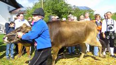 Cattle Livestock driving down Alps Oberstdorf Allgau Bavaria Germany Stock Footage