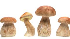Mushroom, mushroom, mushroom … Stock Footage