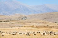 Mountain plateau with flock of sheep Stock Photos