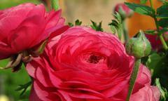 Magic rose Stock Photos