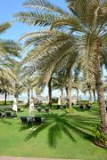 Sunbeds on the green lawn and palm tree shadow in luxury hotel, dubai, uae Stock Photos