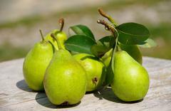 Green pears - stock photo