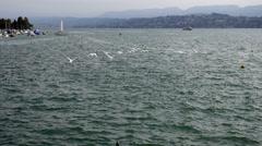 Swans Zurich Lake Stock Footage