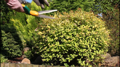 trimming bushes - stock footage