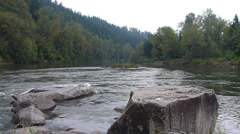 River in Lush Forest Stock Footage