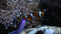 Marine fish in the aquarium Stock Footage