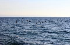 Stock Photo of Seagull, Sea