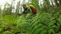 Traveler and ferny brakes Stock Footage