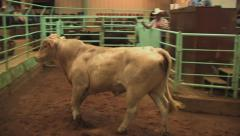 Cattle auction 4 Stock Footage