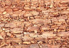 rotting wood - stock photo