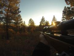Rifle mounted camera hunting at sunset. Stock Footage