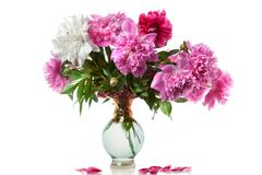 Boquet of peony in a vase isolated on white Stock Photos