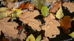 Autumn oak leaves in water Stock Footage