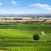 Vineyard landscape, montagne de reims, france Stock Photos