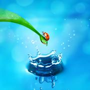 lady bug on green leaf and water splash - stock photo
