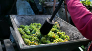 Stock Video Footage of Manually pressing grapes