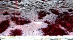 Winemaking Stock Footage